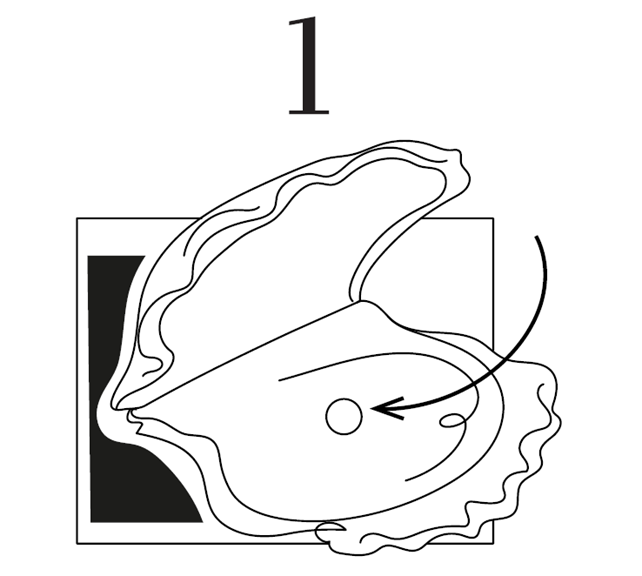 perla ostrica